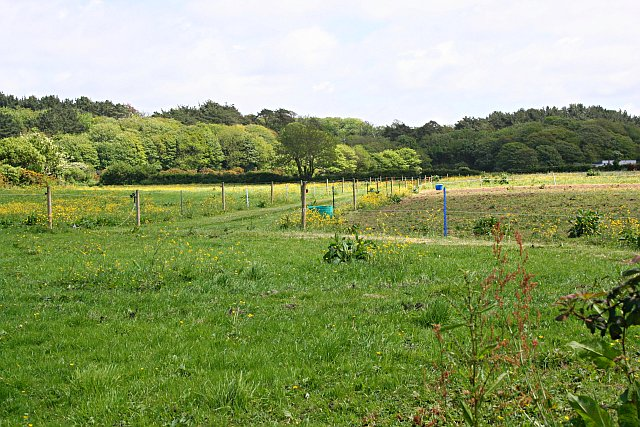 Fenced Pasture and Woodland