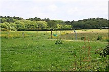 SW6337 : Fenced Pasture and Woodland by Tony Atkin