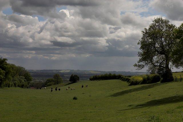 Valley Behind Hall Farm - Aislaby