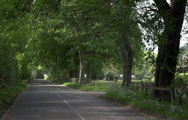 Avenue of trees, Rosedale Abbey