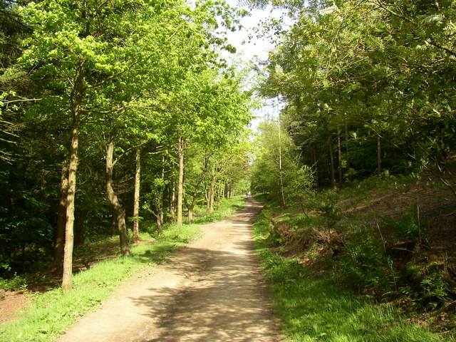 Bridleway in Chevin Country Park