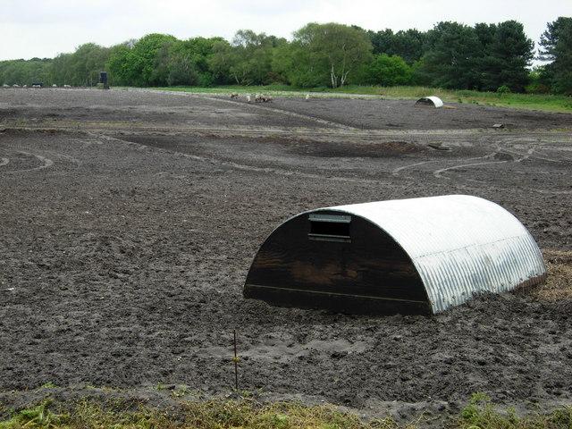 Pig field near Sudbourne