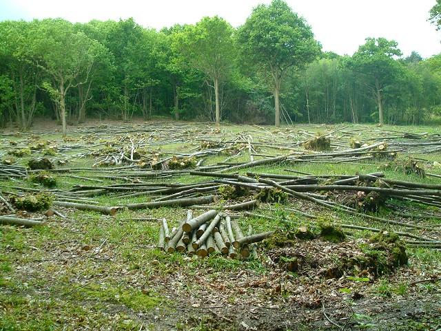 Hawksden Park Wood