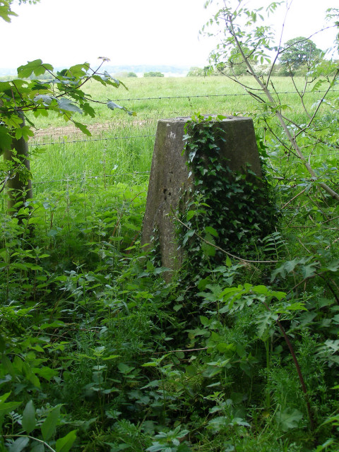 Trig pillar being reclaimed by nature, Clearbury Ring
