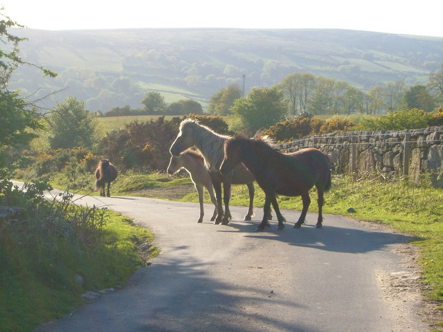 Ponies in the lane near Scobitor