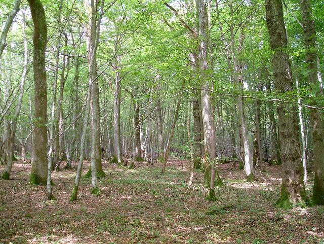 Newbridge Wood