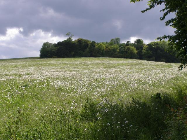 Charlton Plantation