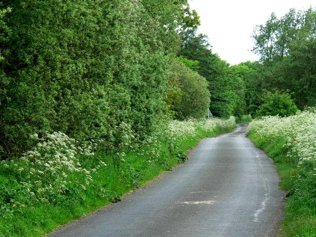 Bulmer Lane