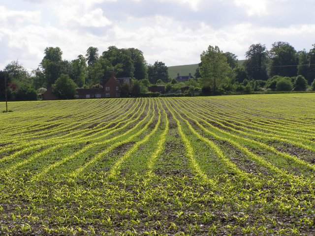 Fields near Charlton Manor Dairy