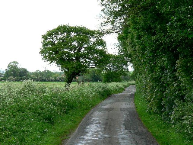 Baileywood Lane