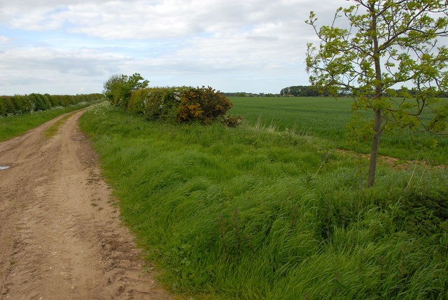 Country lane south of Brancaster Staithe