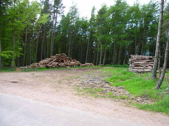 Woodpiles at Bardspark