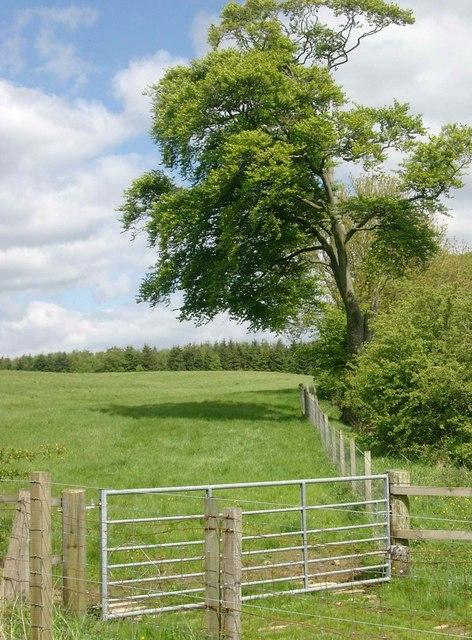 Field boundary near Hemphill