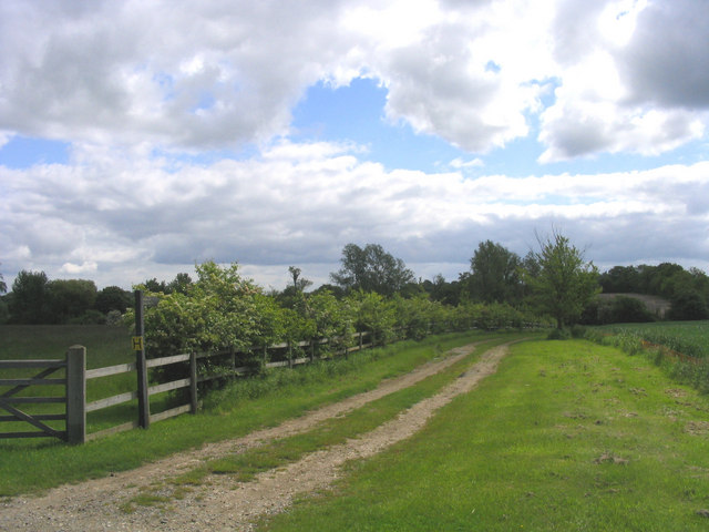 The Essex Way near Miller's Green