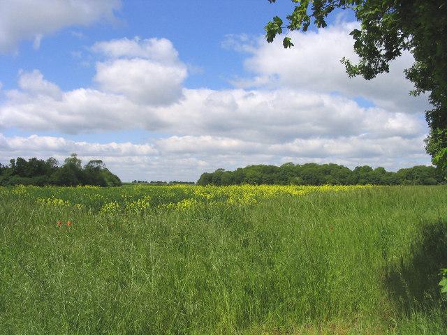 Oil-seed rape field, Norwood End