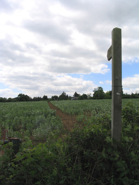 Path through the beanfield