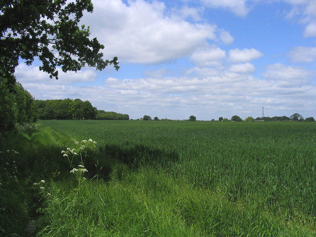 Wheatfield and woodland
