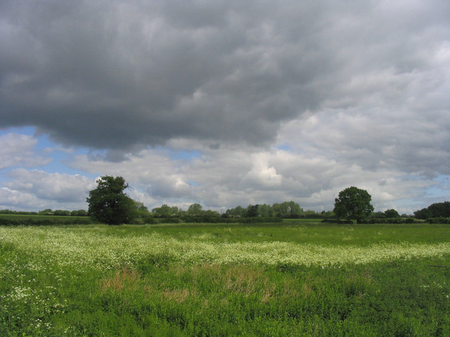 Meadows and trees near High Ongar