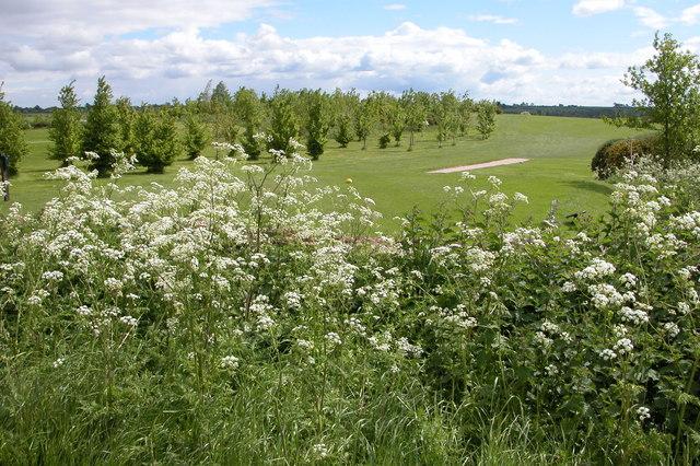 Naunton Downs Golf Course
