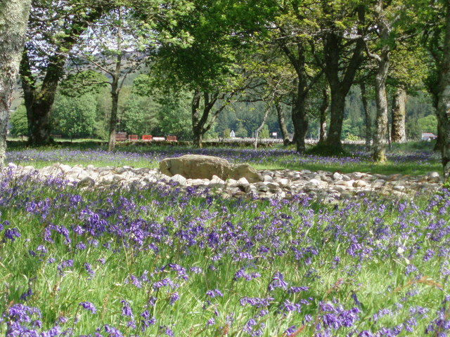 Templewood stone circle and bluebells.