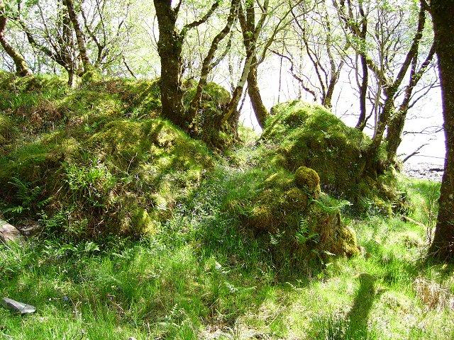 Woodland beside Loch Sunart