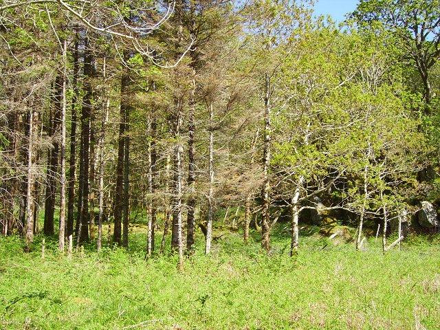 Forest, Loch Sunart