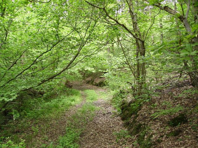 Track Burn Barrow Wood