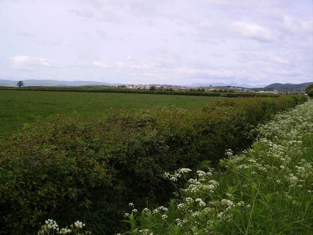 Hedge Flookburgh