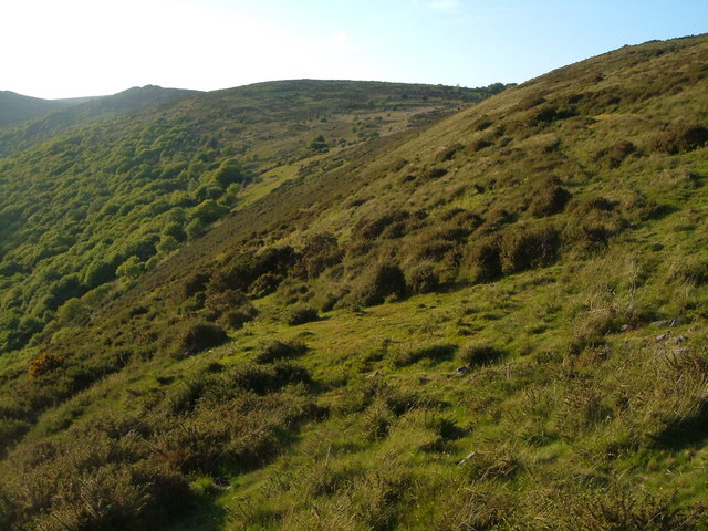 Slopes of Dart valley below Aish Tor