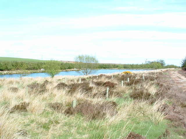 Wood of Fallside Reservoir