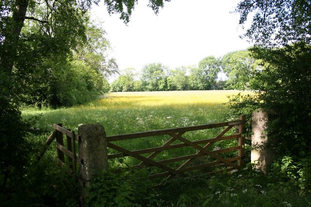Sylvan pasture