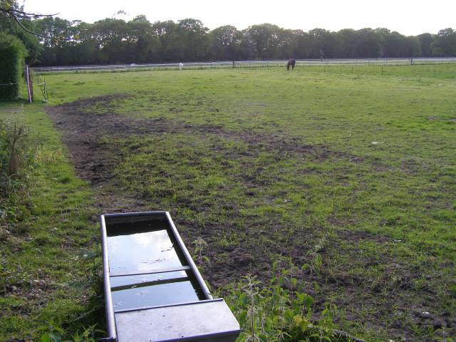 Horses in a field off Kings Copse Road