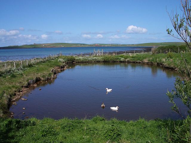 Seaside duck pond
