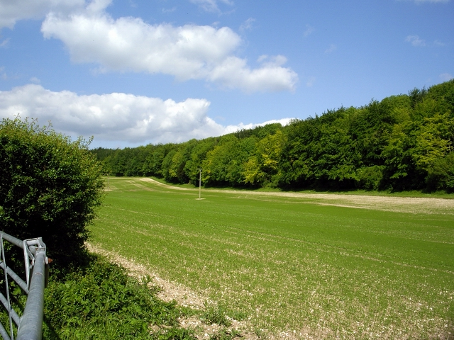 Field and woodland opposite Bailey's Down