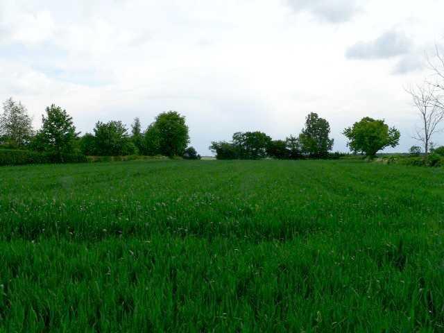 Barley, Seaton Ross