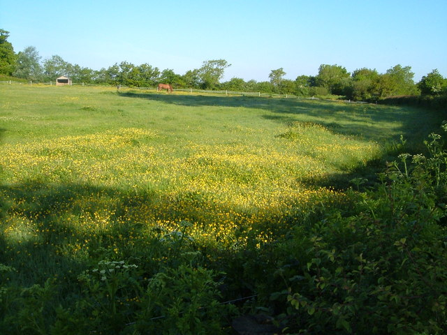 Meadow near Talaton