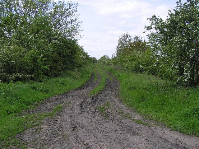 Wildgoose Lane.