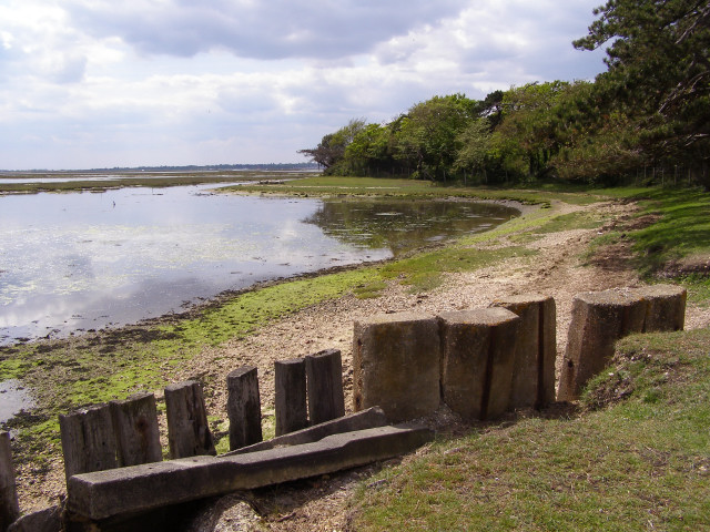 Pylewell Shore, New Forest