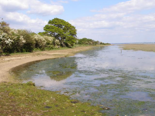 Solent shore south of Lisle Court