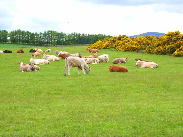 A load of bullocks!