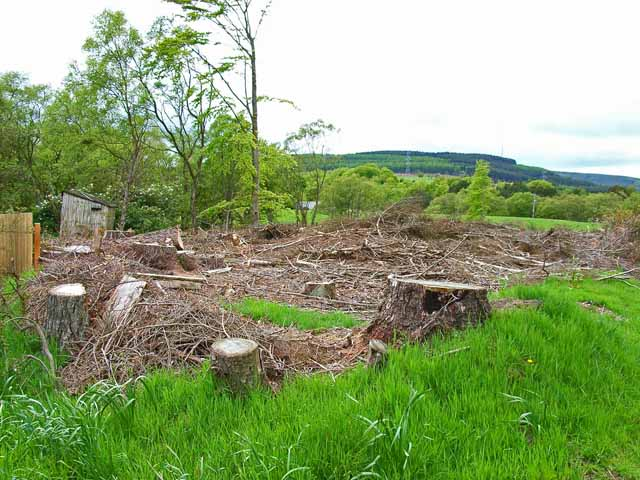 Cleared woodland at Snob Cottage