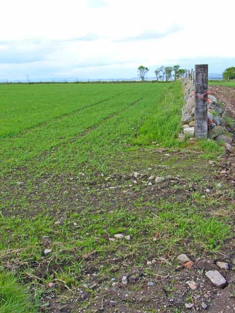 Field near Upper Muirskie