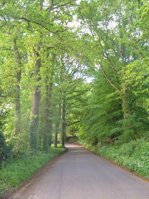 Lane at Higher Metcombe