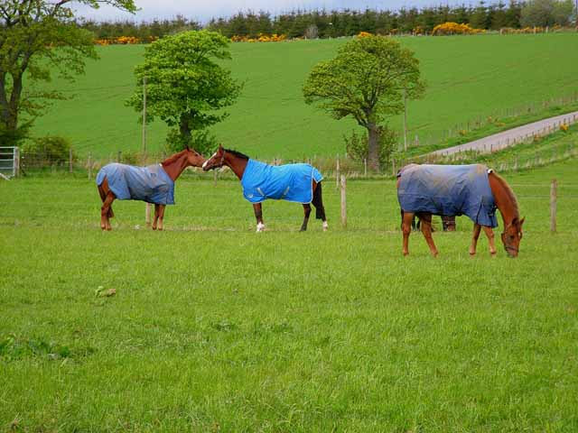 Horses at Blairs Farm