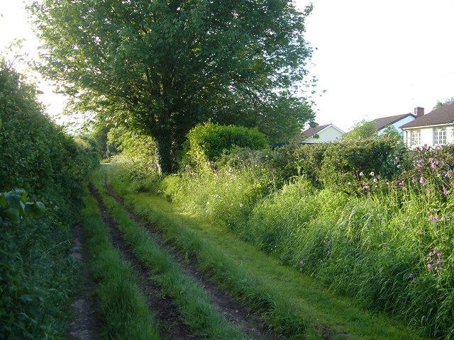 Green lane at Metcombe