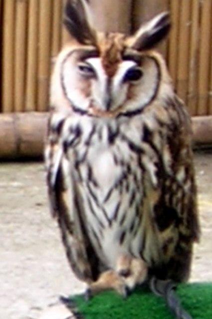 Owl at Garden Centre