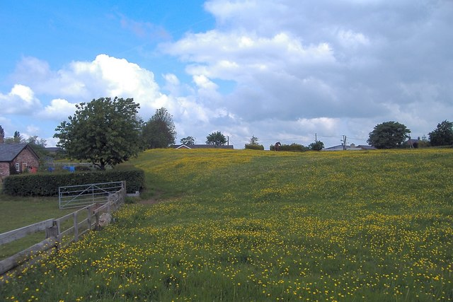 Buttercup meadow, Rushton