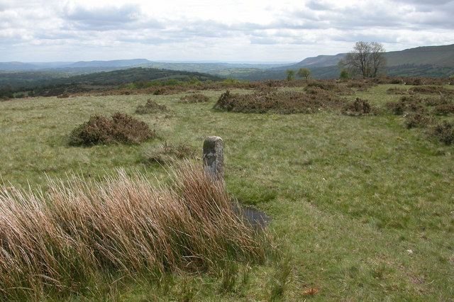 Boundary Stone on Cefn Hill