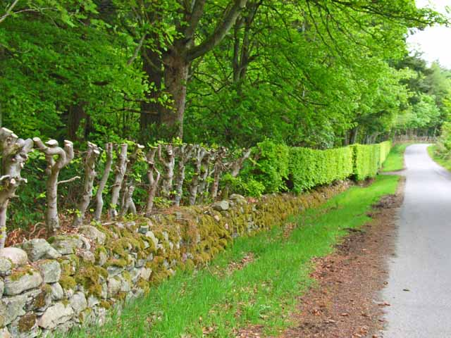 A neatly maintained hedge at Altries