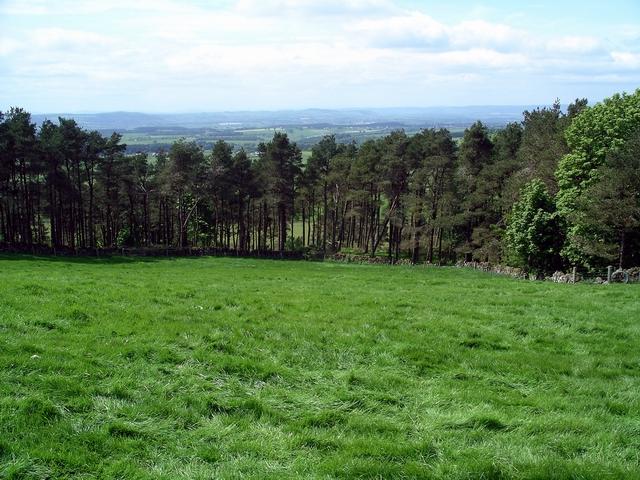 Bessie's Apron Plantation